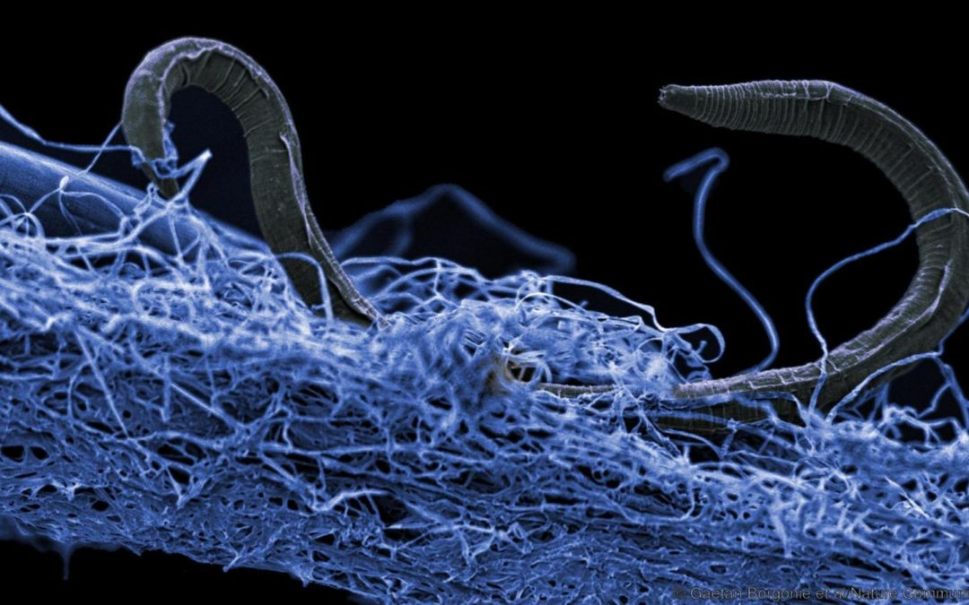 Life in Deep Earth Totals 15 to 23 Billion Tonnes of Carbon—Hundreds of Times More than Humans